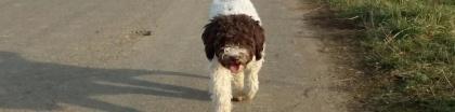 Trüffelsuchhundeausbildung pro und contra