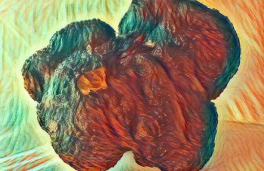 Biologie der Trüffel